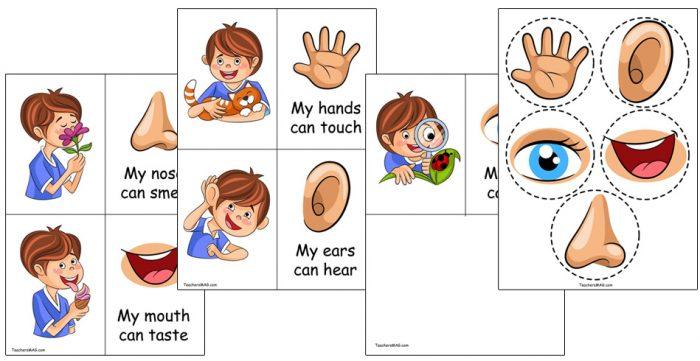 5 Senses Activities For Preschoolers – BuyLapbook