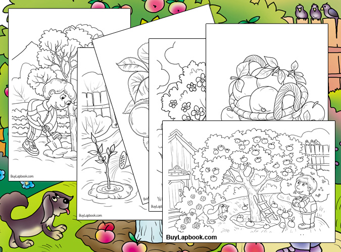 Life Cycle of Apple Trees FREE Coloring Sheets