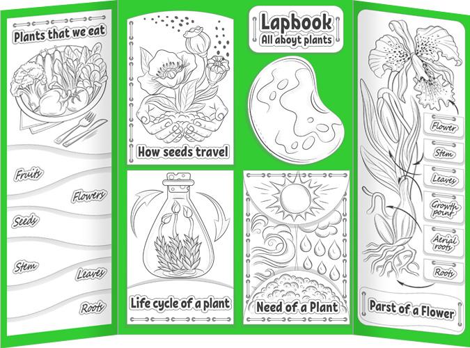 Plants Lapbook