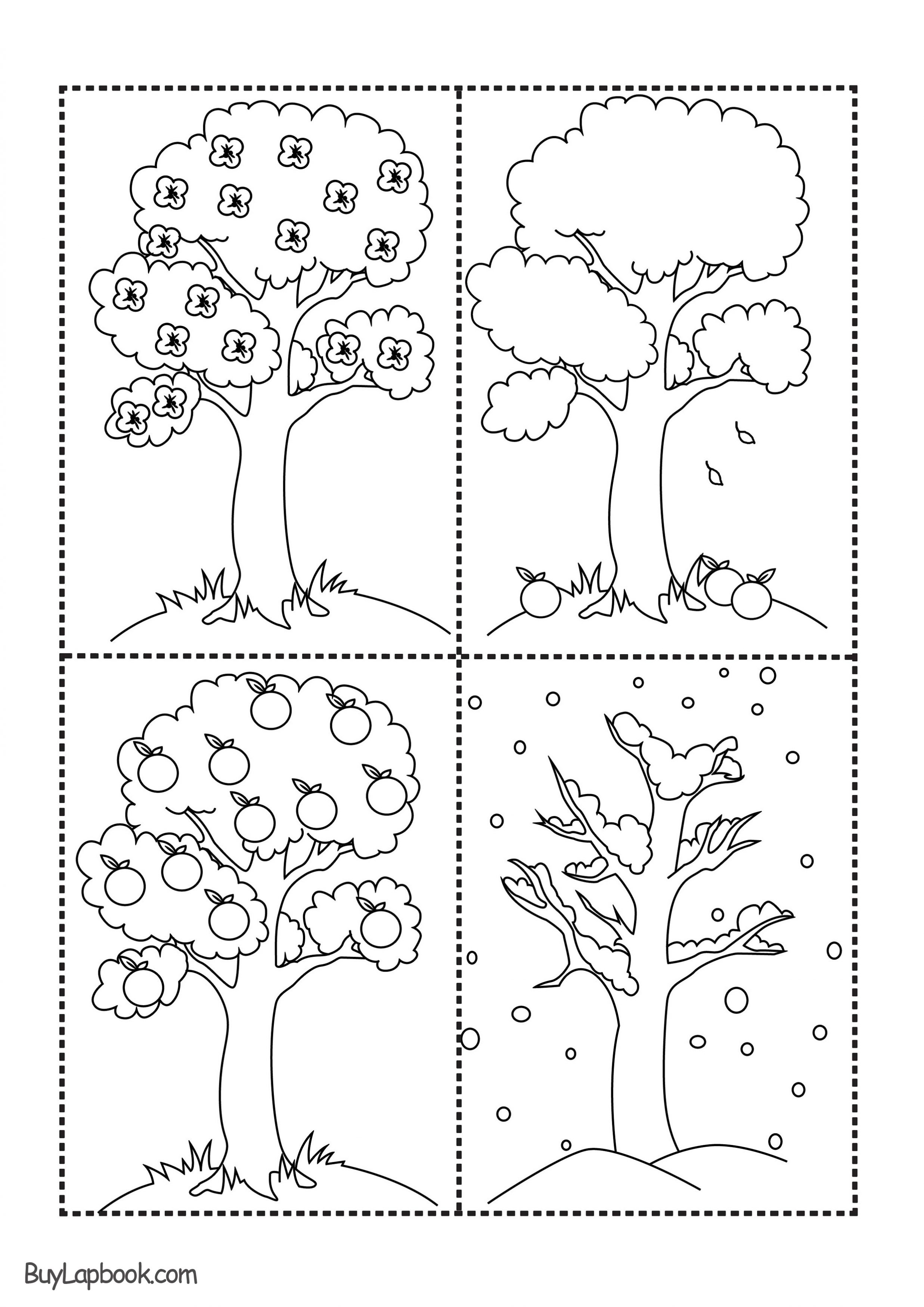 Seasons of an Apple Tree
