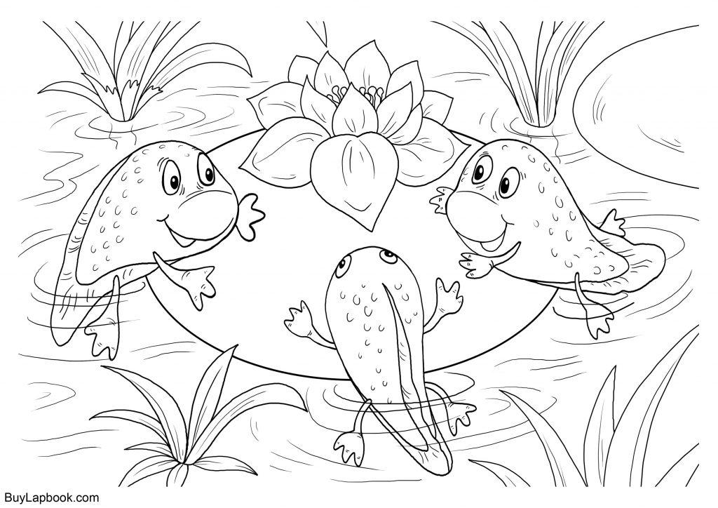 Todpoles coloring